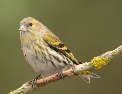 Wild bird species in decline. Are we destroying local wildlife with hormones and chemicals?