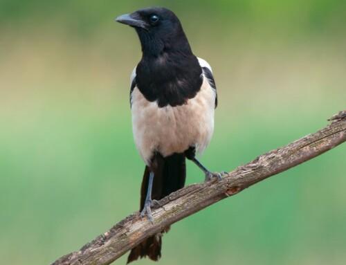 5 Common Bird Superstitions