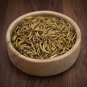 Premium dried mealworms