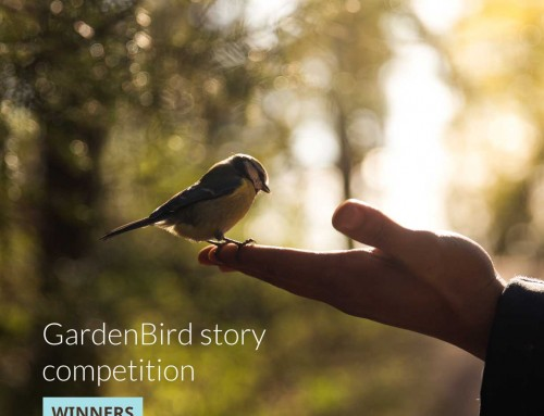 Winners of the GardenBird story competition