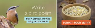 Bird-Poem-banner