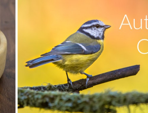 2016: Early Autumn catalogue photo competition