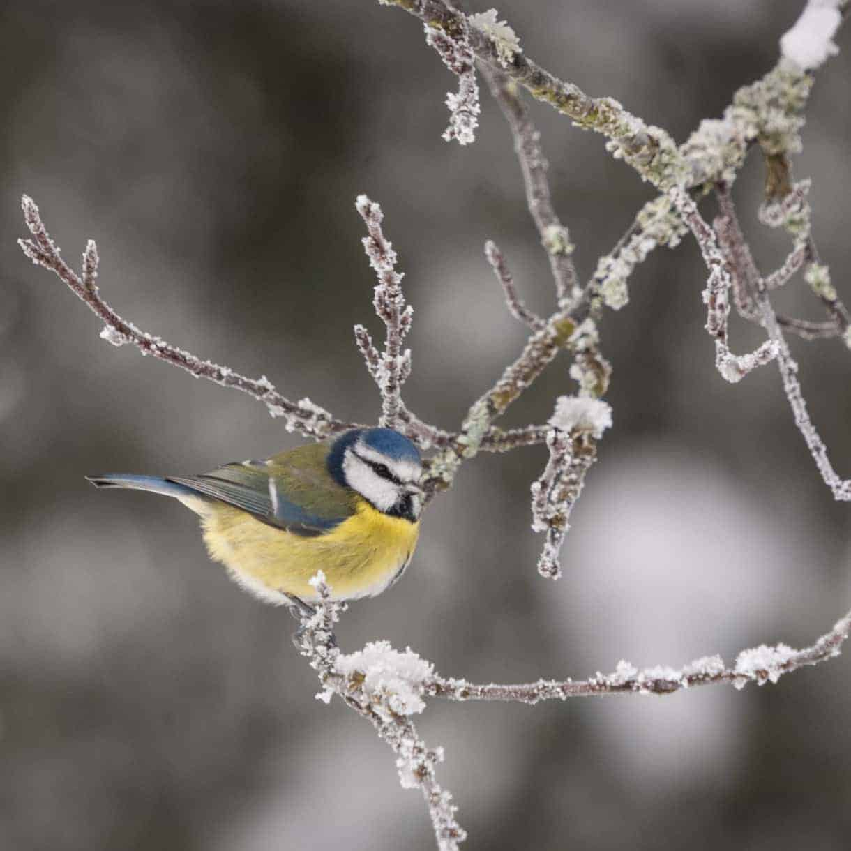 winter-garden-bird