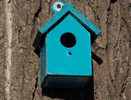 Nest box size guide