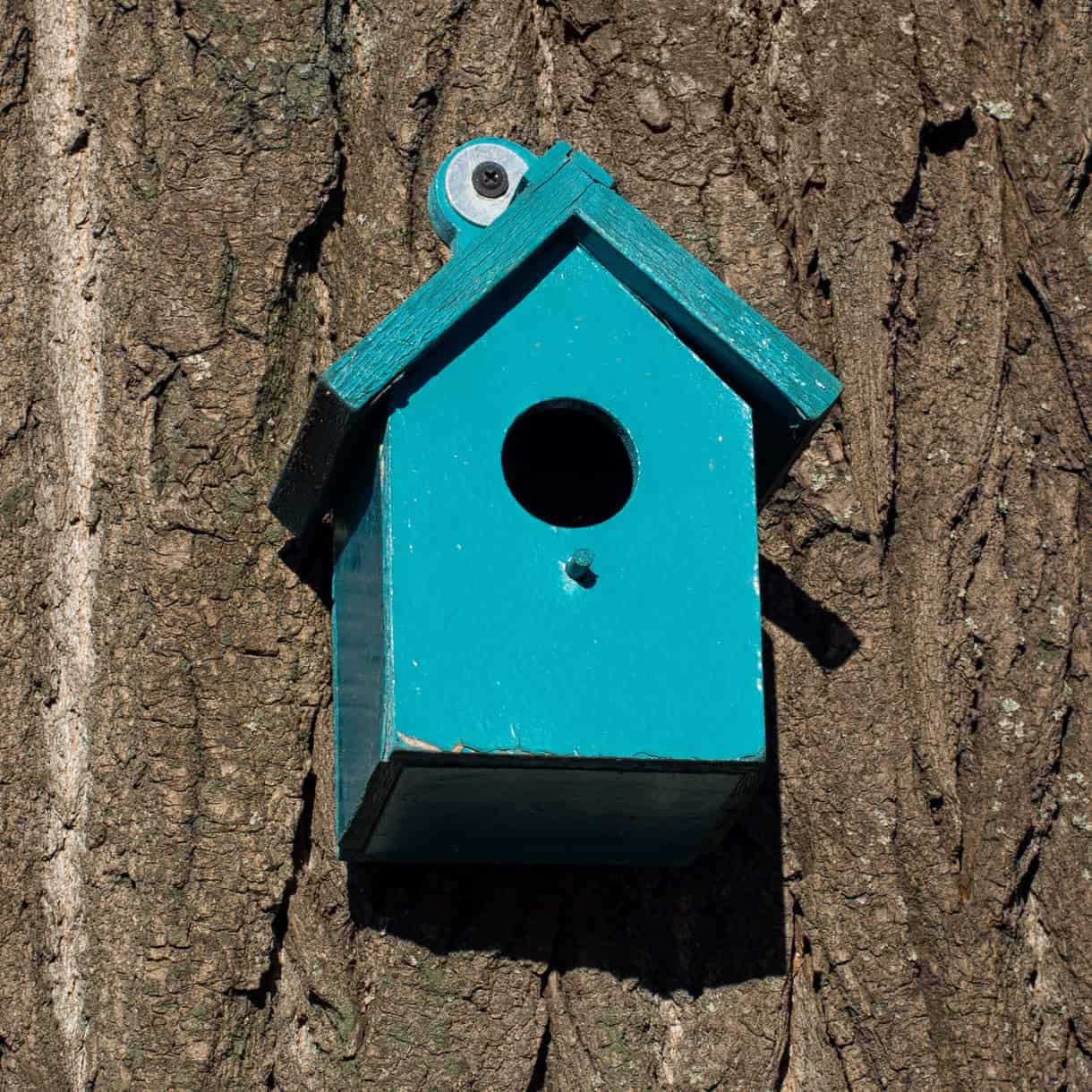 Nest Box Size