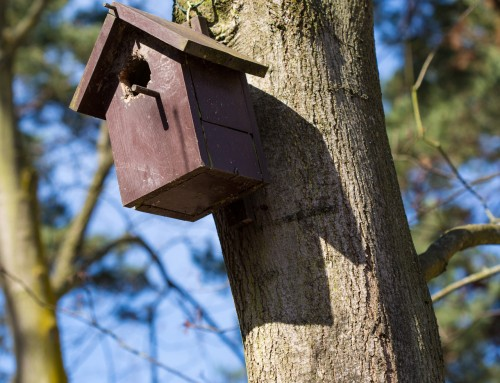 Where to site a nest box in your garden