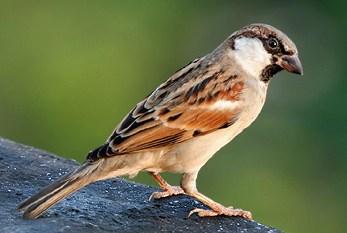 World Sparrow Day 2