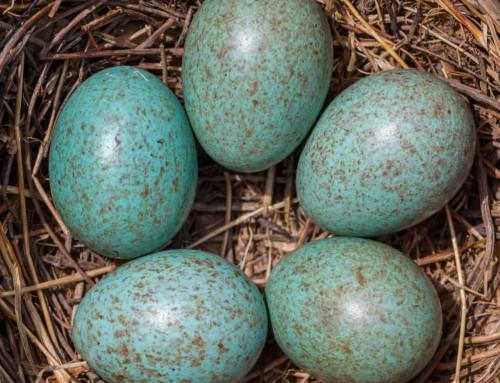 Bird egg identifier