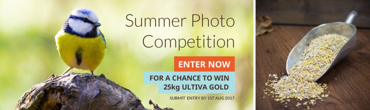 Summer-Photo-Competition-Banner