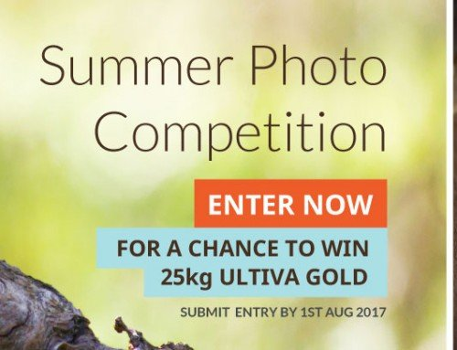 2017: Summer catalogue photo competition