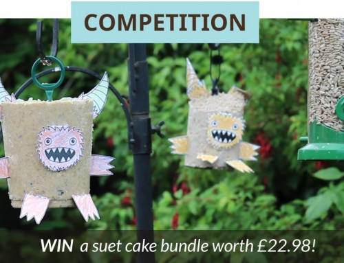 Suet Monster Competition