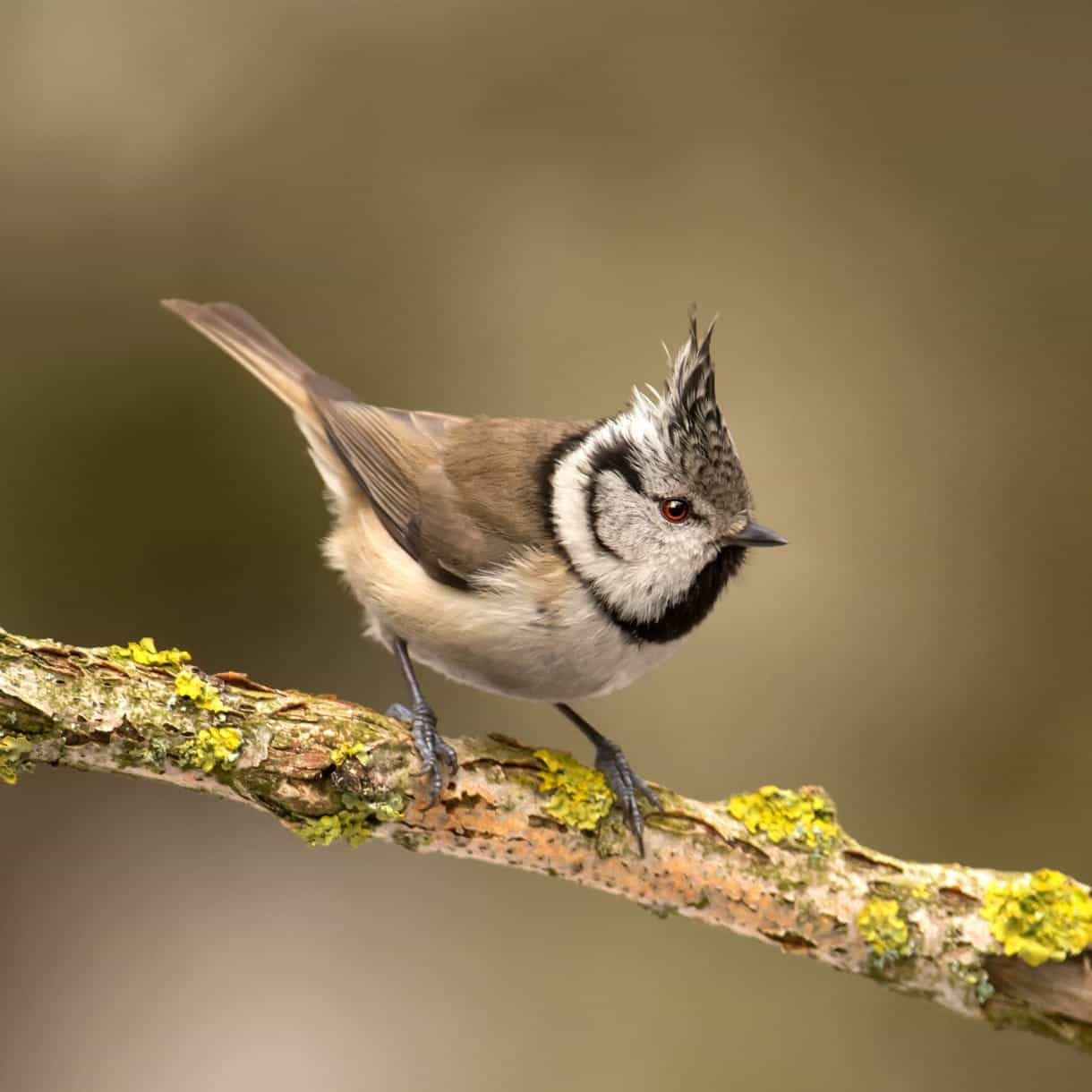 What does a tit look like? 53