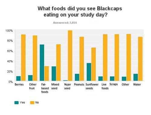 BTO Blackcap feeding study