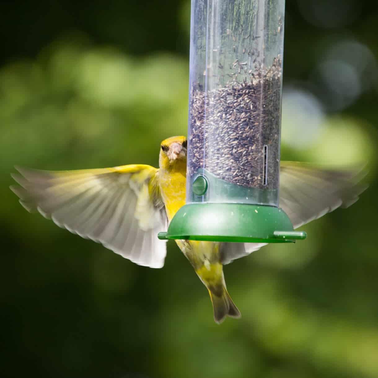 5 ways to minimise the spread of disease among garden birds