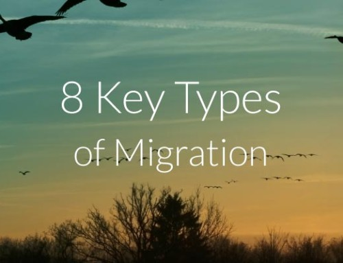 8 Key Types of Migration