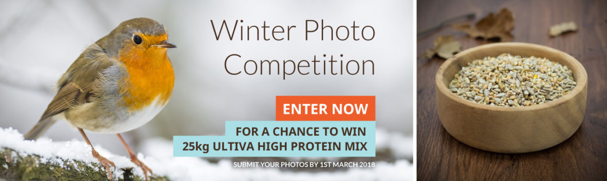 Winter-Photo-Competition-Banner-HQ