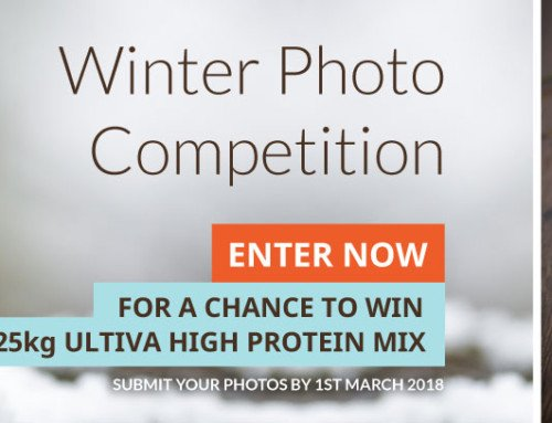 2017: Winter photo competition