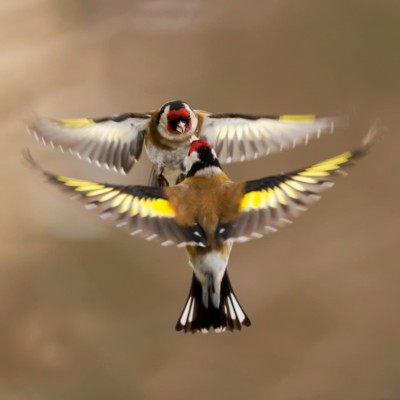 GardenBird - bird poll