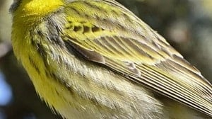Serin upper and lower parts