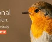 A Seasonal Transition - GardenBird