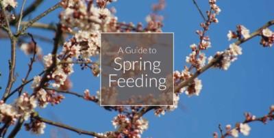 Sprig-feeding-banner