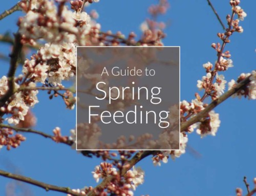 A Guide to Spring Feeding