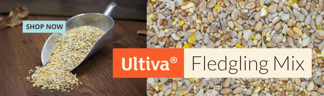 Ultiva Fledgling Mix - shop now