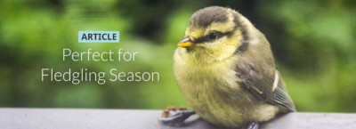 perfect-for-fledgling-season-banner