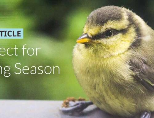 Perfect for fledgling season