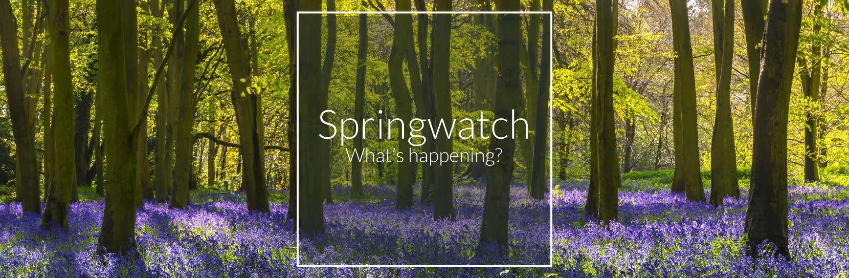 Springwatch 2018 – What's Happening so far?