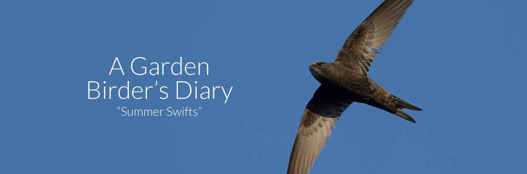 A Garden Birder's Diary: Summer Swifts