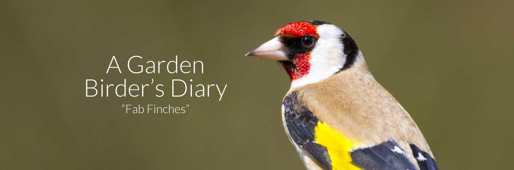 A Garden Birder's Diary: Fab Finches