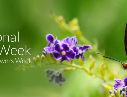 National Insect Week + British Flowers Week