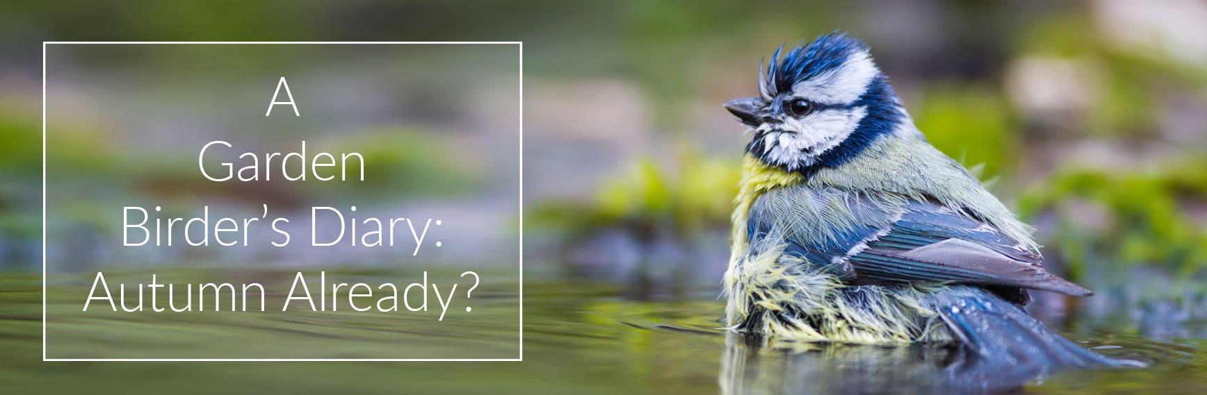A Garden Birder's Diary: Autumn Already?