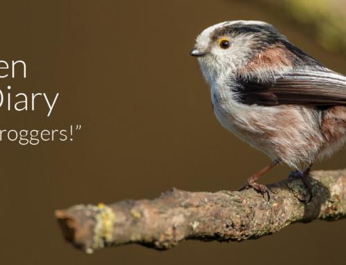 A Garden Birder's Diary – Long-tailed Leapfroggers!