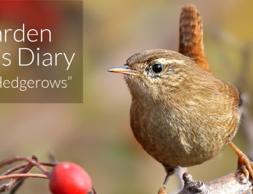 A Garden Birder's Diary – Autumn Hedgerows