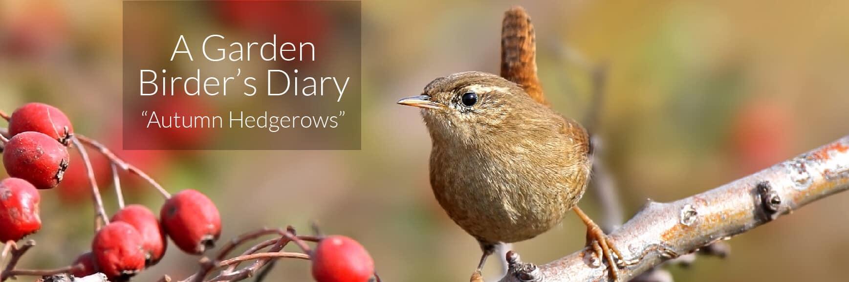 A Garden Birder's Diary – Autumn Hedgerows