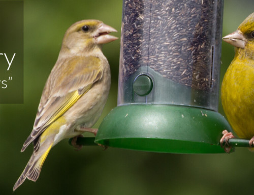 A Garden Birder's Diary – Winners and Losers