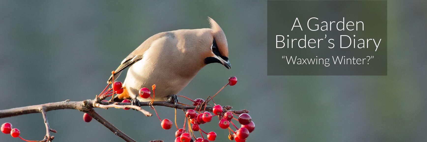 A Garden Birder's Diary – Waxwing Winter?