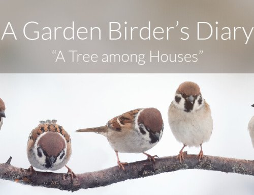 A Garden Birder's Diary – A Tree among Houses