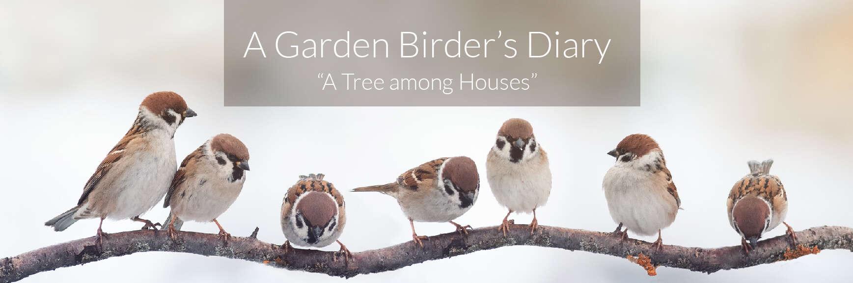 A Garden Birder's Diary – A Tree among Houses