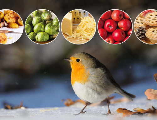 Feeding Christmas leftovers to garden birds