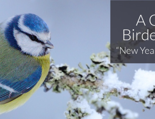 A Garden Birder's Diary – New Year in the Garden.