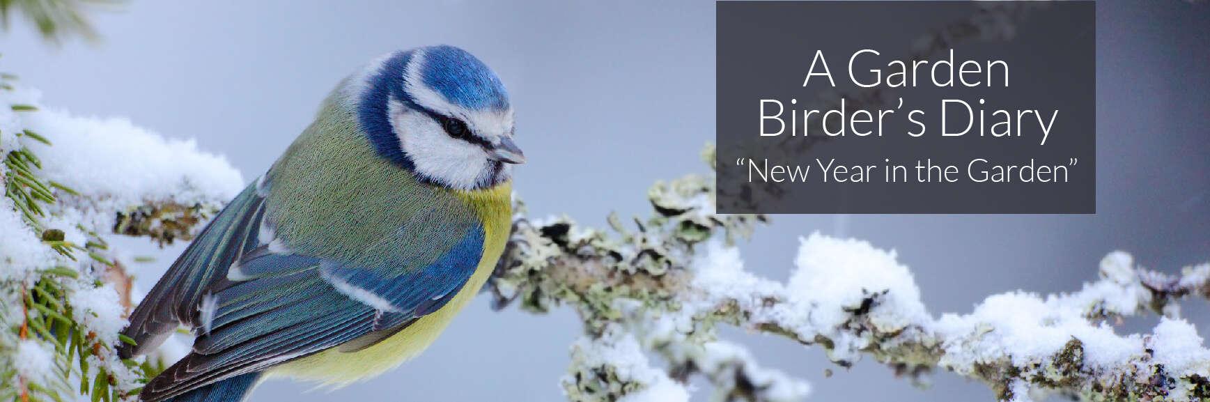 A Garden Birder's Diary – New Year in the Garden.