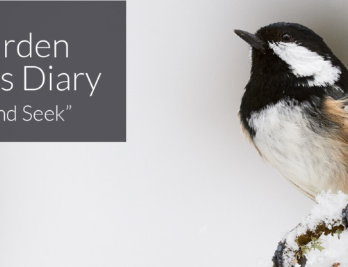 A Garden Birder's Diary – Hide and Seek.