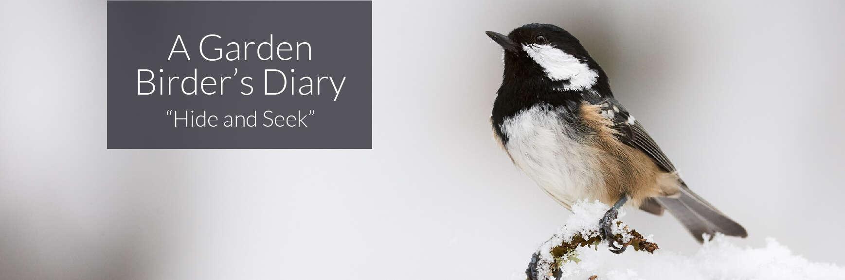 A Garden Birder's Diary – Hide and Seek.