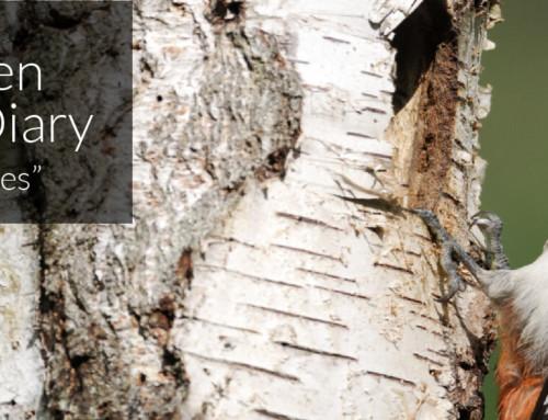 A Garden Birder's Diary – Garden Trees