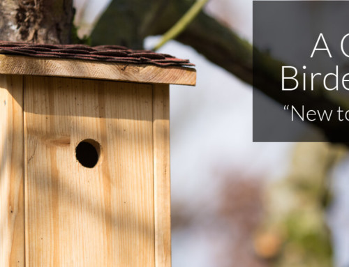 A Garden Birder's Diary – New to Nest Boxes