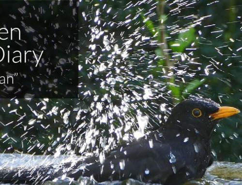 A Garden Birder's Diary – Spring Clean