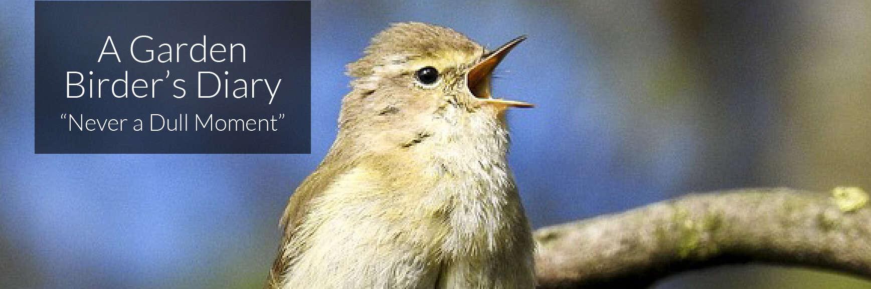A Garden Birder's Diary – Never a Dull Moment